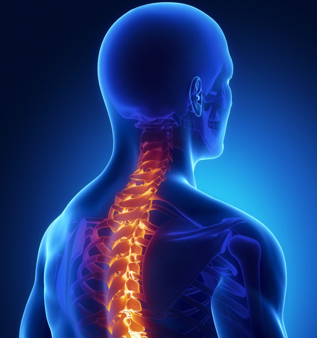 An Introduction to Spinal Health